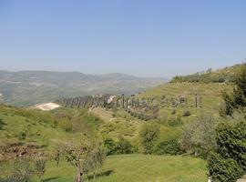 1357 - Mezzane